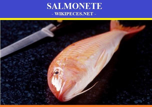 Pescado de carne azul- El Samonete- wikipeces.net