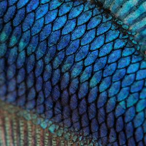 escamas de los peces - wikipeces.net
