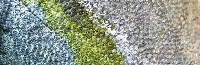 Color del Pez Limón - wikipeces.net