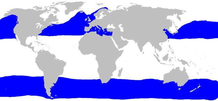 Habitat del tiburón peregrino - wikipces.net