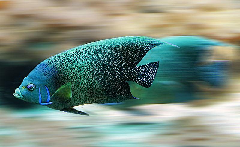 Pez nadando - wikipeces.net