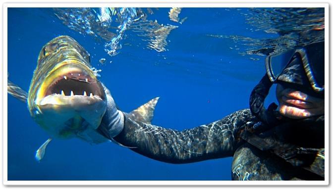 Boca del dentex dentex - wikipeces.net