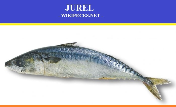 El Jurel - wikipeces.net
