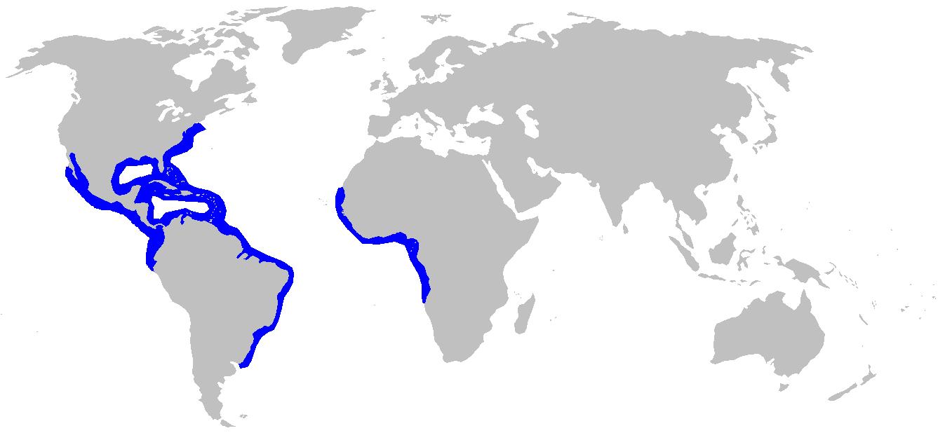 Habitat del tiburón Negaprion Brevirostris o tiburón limón
