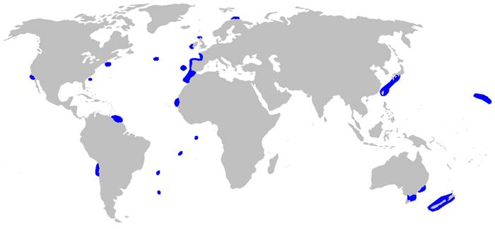 Habitat del tiburon anguila - wikipeces.net