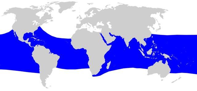 habitat del tiburon ballena - Rhincodon typus - wikipces.net