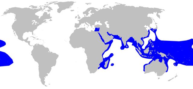 habitat del tiburon de puntas negras - Carcharhinus melanopterus