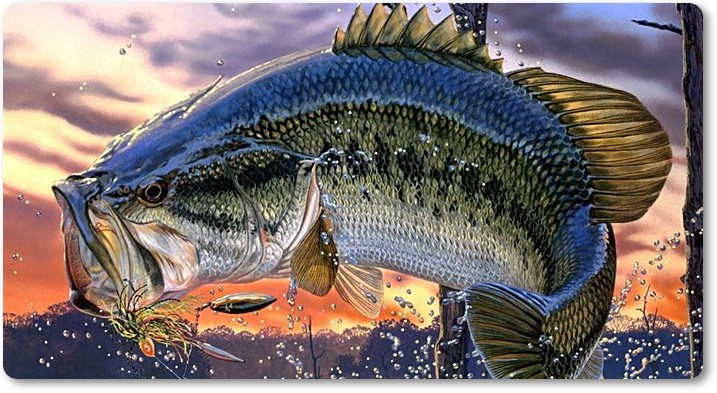 Pesca del black bass - wikipeces.net